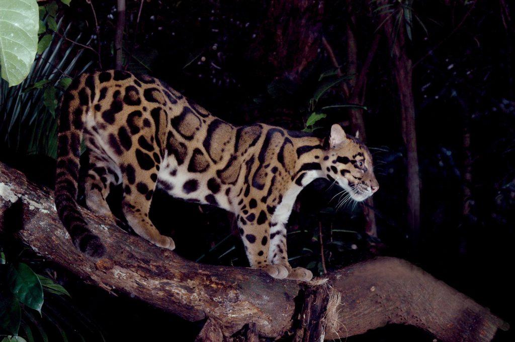 Leopard Walking Trail