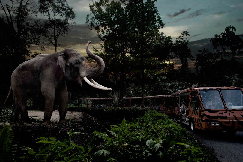 Tram Ride Safari