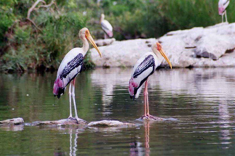 River-Gallery-Mysore