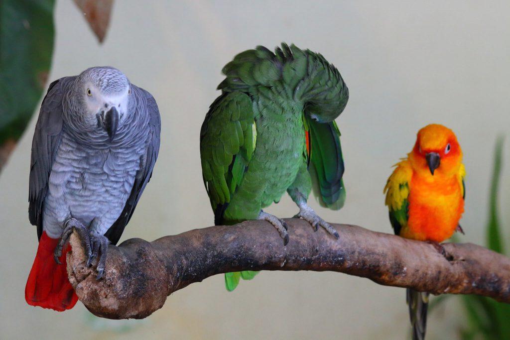 Bird Park Lake Garden