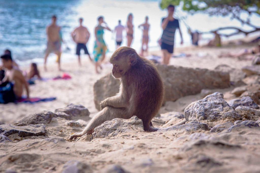 Monkey Beach Thailand